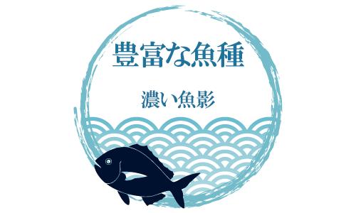 豊富な魚影